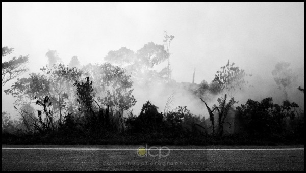 burning forest-1, Bintulu