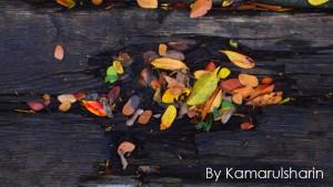 By Kamarulsharin